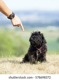 A guilty-looking small black puppy receiving a scolding from its owner in the form of a stern pointing.