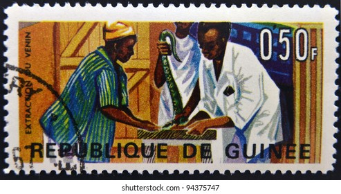 GUINEA - CIRCA 1967: A stamp printed in Guinea shows Extraction of snake venom, circa 1967