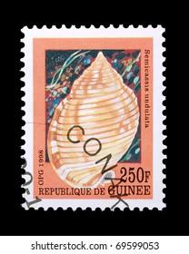 GUINEA - CIRCA 1998: A stamp printed in Guinea showing sea snail, circa 1998