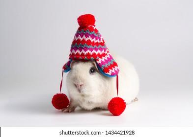 Guinea pig andean wool hat