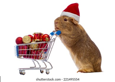 Guinea pig with christmas shopping cart