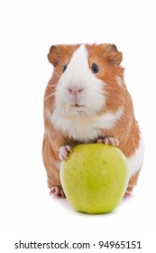 guinea pig with green apple over white background
