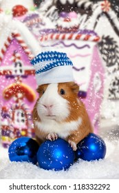 guinea pig in winter hat over Christmas background