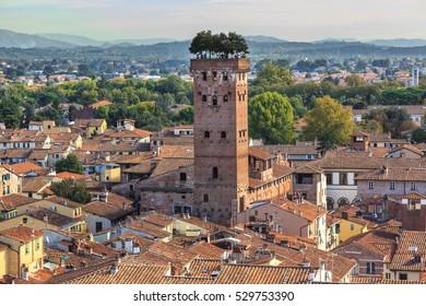 Guinigi tower in Lucca. Italy