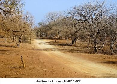 Gujarat, India: Dirt road inside Gir National Park and Wildlife Sanctuary also known as Sasan Gir.