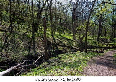 gulch along trail and hillsides during spring at flandrau state park minnesota