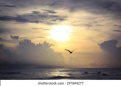 Gulf Coast sunset with bird silhouette at Crescent Beach in Siesta Key, Florida