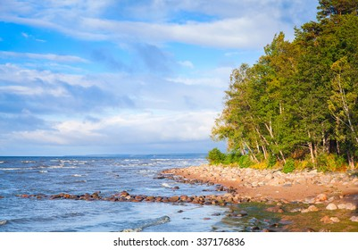 Gulf of Finland, landscape with coastal stones and trees under blue cloudy sky