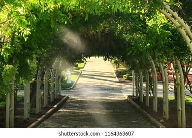 Gulhane Park Tree Road Romantic Istanbul - Turkey