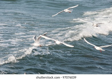 Gull against the waves