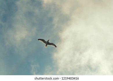 Gull is fling in the sky above the sea