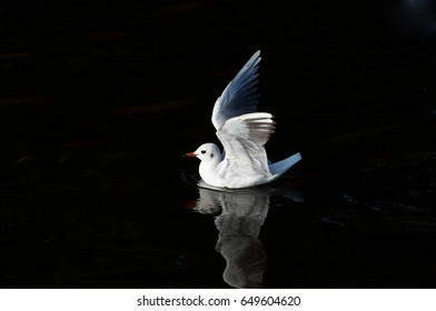 Gull floating on the water