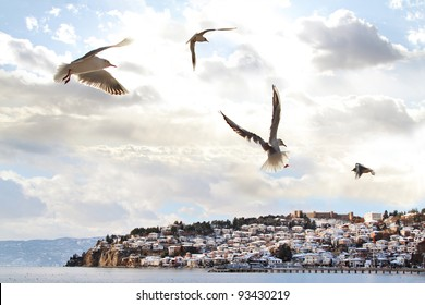 Gull flying over a blue sky above the Ohrid Lake, Macedonia