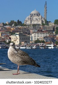 Gull in front of a mosque in Istanbul - Turkey