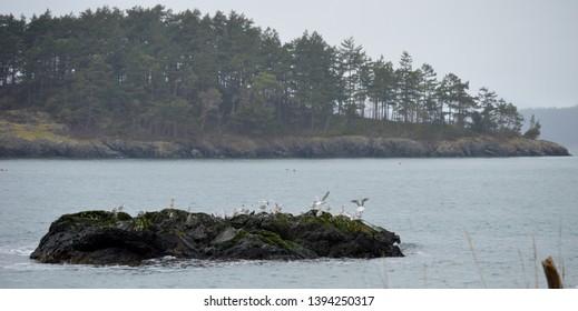 Gull Island, Bowman Bay, Deception Pass State Park, Washington.