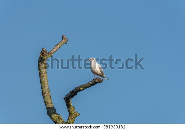 Gull looking in to branch blue sky