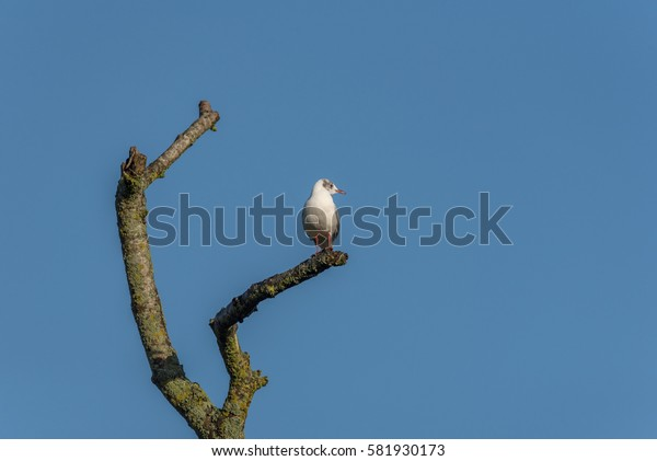 Gull on branch blue sky