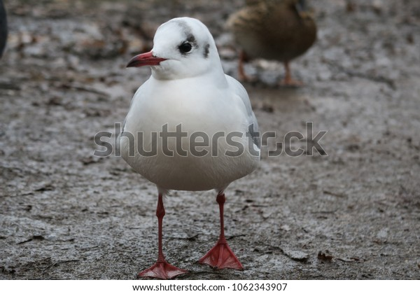a gull on the ground