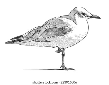 gull on the one leg