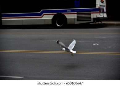 The gull on the road