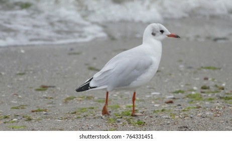 Gull is one of the most popular seaside birds. She lives and preaches on the beach very often when interacting with people.