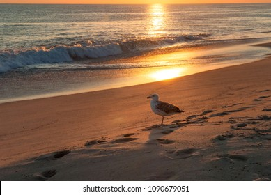 A gull rests on Madaket Beach, Nantucket, MA