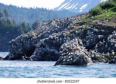 Gull Rock covered with Seagulls near Homer Alaska