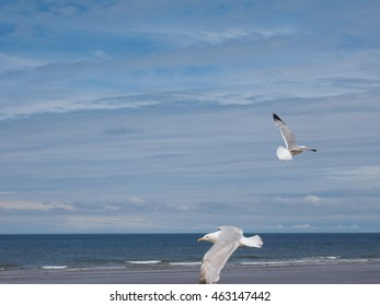 Gull seabird aka Seagull or Mew bird animal