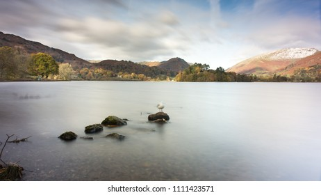 A gull stands on a rock in Grasmere in the lake district, with Helm Crag and Seat Sandal mountains rising in the distance.