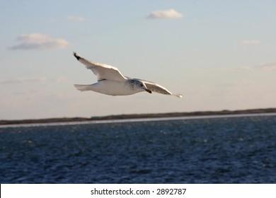 Gulls at the beach, Long Island, NY