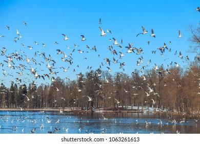 gulls flying against the blue sky