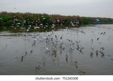 Gulls flying at Bangpu beach, Thailand