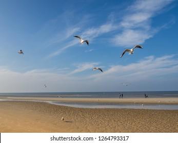 Gulls at the North Sea on a sandbank