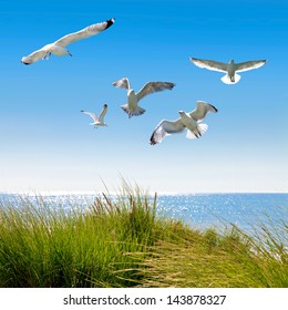 Gulls on the dunes to the sea. Seascape.