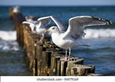 Gulls on groynes in the surf on the German Baltic coast