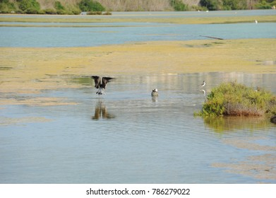 Gulls on the Mediterranean in Costa Blanca, Spain