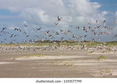 Gulls on north sea beach