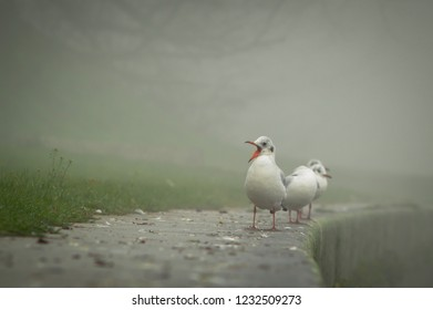 Gulls on the river bank, embankment, fog over the river