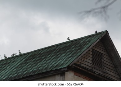 Gulls on the roof of an industrial building