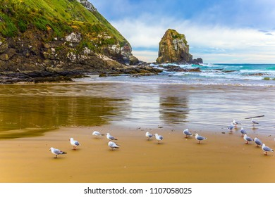 Gulls on a sandy beach. Picturesque New Zealand, South Island. Concept of active and ecological tourism