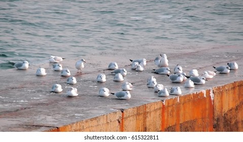 Gulls on the sea at the pier in the summer