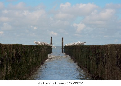 Gulls sleep on a breakwater