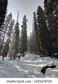 Gulmarg woods during winter.