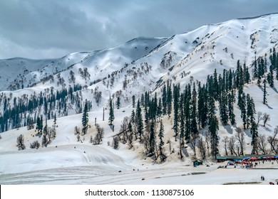 Gulmarg,15,April,2016 Jammu and Kashmir , View of tourists engaged in recreational and sports activity under snow covered mountains with Alpine trees  in background,Jammu and Kashmir, India. Asia