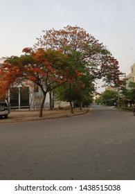 The Gulmohar tree provides welcome shade and spectacular color in the warm climates.The attractive, semi-deciduous leaves are elegant and fern like.