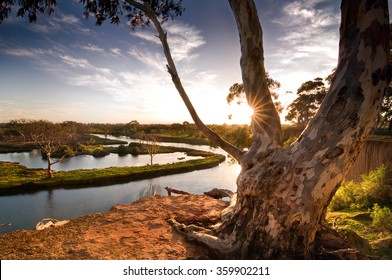 Gum tree atop riverbank in country Australia.