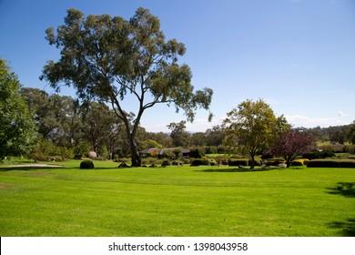 Gum tree in gardens , Cowra, NSW
