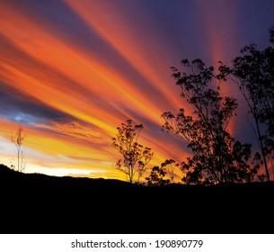 Gum tree silhouette with brilliant Australian autumn sunset and radiatus clouds