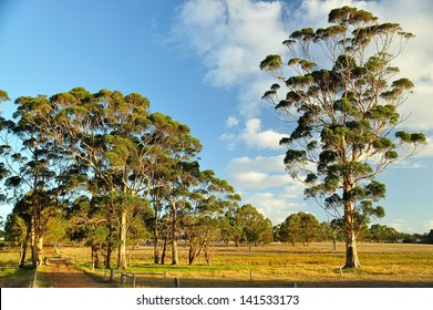 gum trees in farming scene