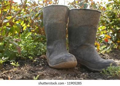 Gumboots in vegetable garden
